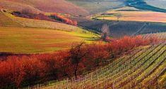 Che cosa vedere tra Langhe, Roero e Monferrato - Arte, cultura, sapori, natura: dieci motivi per visitare il bellissimo territorio piemontese