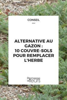 Remplacer le gazon est une alternative intéressante pour consistuer une pelouse sans entretien. Découvrez notre sélection de plantes couvre sol pouvant être piétinés ainsi que nos conseils pour mener à bien votre projet.