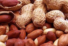 Investigadores del Instituto Internacional de Investigación de Cultivos para los Trópicos Semiáridos (ICRISAT) y otras instituciones asociadas desarrollaron exitosamente maní genéticamente modificado que no acumula aflatoxinas producidas por hongos.