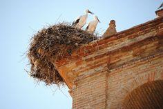 ¿Has conocido ya a todos los habitantes de Añora (Córdoba)? / Have you ever met all the inhabitants of Añora (Córdoba)?