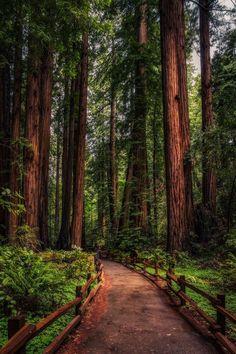 ~~Redwood Path ~ John Muir Trail, California by Justin in SD~~