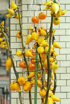 Halloween in Japan : the strange fruits tree