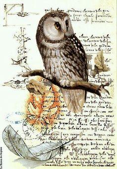 A coruja e a carta