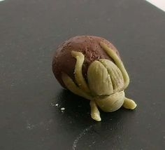 Dung beetle truffle