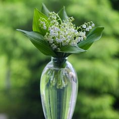 Lily of the Valley | Still Dacha Life  •  •  •  #nature_perfection #natureaddict #nature #naturesbeauty #nature_obsession #visualoflife #stilllifephotography #dailydoseofcolor #vase #flowers #stilllife #gentle #garden #calm #floral_perfection #floral #lilyofthevalley #green #minimal #minimalism #ipreview @preview.app
