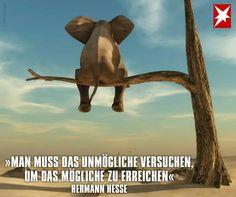"""""""Man muss das Unmögliche versuchen, um das Mögliche zu erreichen."""" (Herman Hesse) #Träume"""