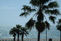 Corpus Christi Condo on the Beach 2 - vacation rental in Corpus Christi, Texas. View more: #CorpusChristiTexasVacationRentals