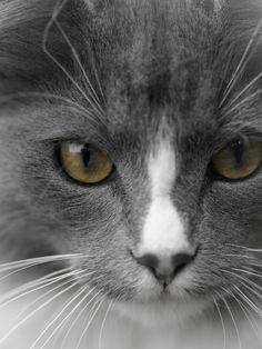 #Caturday(20)