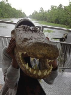 Lolong The Monster Crocodile Of The Philippines Crocodile - Meet worlds largest crocodile caught philippines
