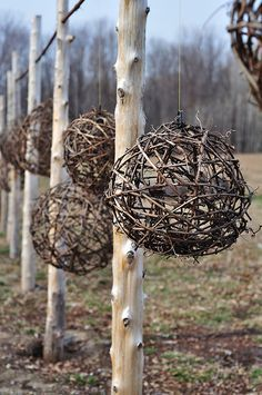 Grapevine Balls at By Chadsey's Cairns