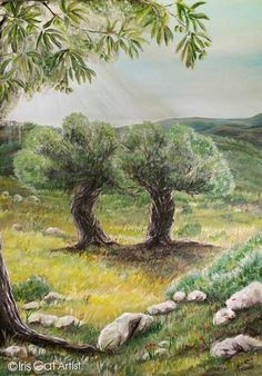 Olive trees dialogue