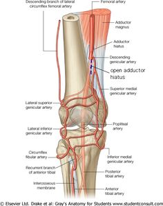 Complex meniscus tear bing images posterior horn meniscal tear sorry our license agreement does not yet allow us to show this image to non ccuart Choice Image
