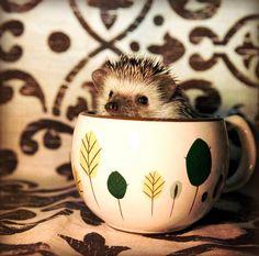 Looks like someone else likes tea! Welcome to the Club!