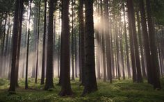 Forest by d o l f i 500px http://flic.kr/p/aRzVnD