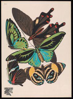 Papillons : vingt planches en phototypie colorie... Plate 1 E.A Seguy.