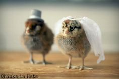 Photo Print 8x10 Two Chicks Bridal Veil Wedding by chicksinhats, $20.00