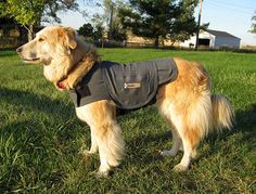 Dog Tip of the Day: Be Prepared for Critical Situations