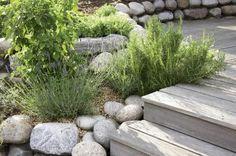 Kräutergarten mit Küchenkräutern selber anlegen und pflegen