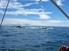 Whatching whales.  #gobahia #cumuruxatiba www.cumurumagicaltour.com.br
