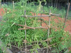 homemade tomato cage :) I like this lady's blog