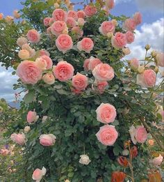 Nature Aesthetic, Flower Aesthetic, Pink Aesthetic, Flowers Nature, My Flower, Beautiful Flowers, Fresh Flowers, Wild Flowers, Aesthetic Backgrounds