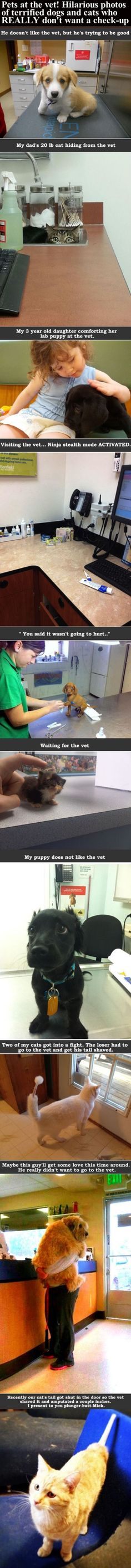 Pets At The Vet! Hilarious Photos Of Terrified Dogs And Cats Who Really Don't Want A Check-Up cute animals dogs cat cats adorable dog puppy animal pets kitten funny animals funny pets funny cats funny dogs