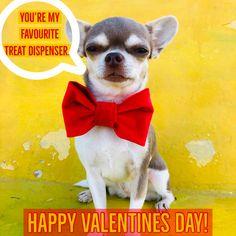 Happy Valentines everyone! Funny Dog Photos, Funny Dogs, Funny Animals, Valentines Day Memes, Happy Valentines Day, Dog Memes, Funny Memes, You're My Favorite, Dog Modeling