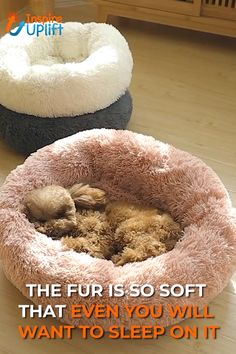 Our furry friends need their own special snuggle place to feel comfy, cozy and loved. Treat your most beloved companion to a little luxury with our Comfy Faux Fur Pet Bed. Made of durable nylon, this pet bed is soft and luxurious, as well as practical New York Bagel, Big Plush, Rat Terriers, Dog Bed, Pet Beds For Dogs, Dog Supplies, Dog Accessories, Diy Crafts For Kids, Dog Treats