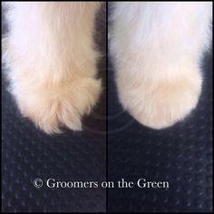 Before & after feet Dog Grooming Styles, Grooming Shop, Dog Grooming Tips, Poodle Grooming, Pet Shop, Dog Haircuts, Puppy Cut, Goldendoodles, Maltipoo