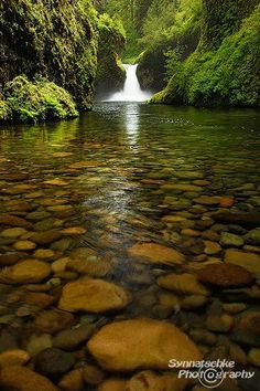 Punch Bowl Falls is a waterfall on Eagle Creek in the Columbia River Gorge National Scenic Area, Oregon, United States. Eagle Creek d. Punch Bowl Falls is a waterfall on Eagle Creek in the Columbia River Gorge Nati. Beautiful Waterfalls, Beautiful Landscapes, Beautiful World, Beautiful Places, Trees Beautiful, Natur Wallpaper, Nature Pictures, River Pictures, Natural Wonders