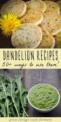 Dandelion flowers are edible and medicinal and have many uses Here are 50 dandelion recipes for drinks sweets baked goods savory dishes bath and body and home remedies dandelion flower recipes # Dandelion Recipes, Dandelion Pesto Recipe, Vegan Recipes, Cooking Recipes, Drink Recipes, Herb Recipes, Cooking Pork, Steak Recipes, Edible Wild Plants