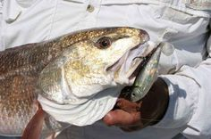 How to Catch Redfish with Experts' Secrets