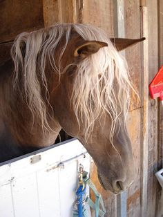 Blonde Forelock and Mane | Flickr - Photo Sharing!