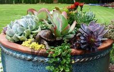 succulents planters tumblr - Google Search