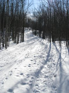 Frontenac Provincial Park Winter Christmas, Camping, Snow, Park, Outdoor, Campsite, Outdoors, Parks, Outdoor Games