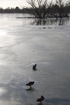Iced Damhus lake