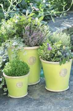 We have these in-store Kew Garden pots - these are beautiful. My local garden centre was selling them half price, so I bought a pale pink one a deep purple one. Kew Gardens, Small Gardens, Garden Planters, Planter Pots, Landscape Curbing, Inside Plants, Deep Purple, Pale Pink, Love Garden