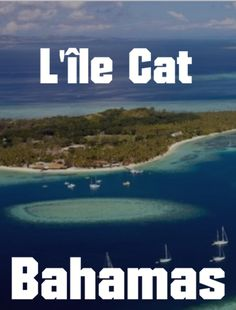 L'île Cat dans les Bahamas Les Bahamas, Cats, The Visitors, Nun, Gatos, Kitty Cats, Cat Breeds, Kitty, Cat
