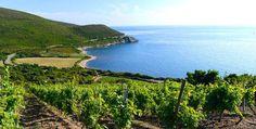 Oenotourisme : 9 appellations et 450 producteurs... C'est la Corse ! par Le Figaro Vin http://snip.ly/i98s?utm_content=bufferb4c4f&utm_medium=social&utm_source=pinterest.com&utm_campaign=buffer