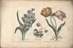 The florist, or, An extensive and curious collection of flowers, for the imitation of young ladies, either in drawing or in needle-work - Biodiversity Heritage Library