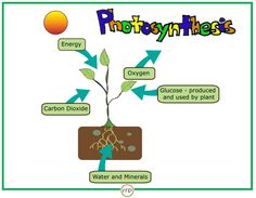 The Poster of Photosynthesis  Clipart: The Painted Crow and Caitlin Miller
