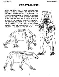polar bear anatomy and physiology - Cerca amb Google