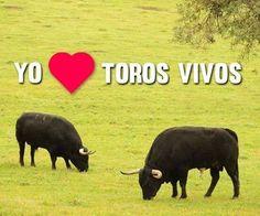 Yo <3 toros vivos