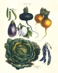 Botanical structure - intricate - detailed - can we modernise? (Antique French Vegetable)
