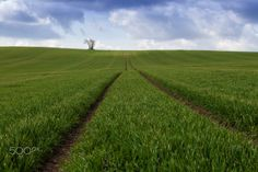 Green carpet - Moravian green carpet