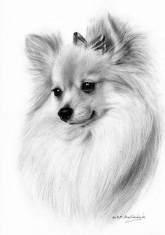 Artist Danguole Serstinskaja www.petdrawings.net Animal Line Drawings, Animal Sketches, Drawing Sketches, Pencil Drawings, Art Drawings, Dog Drawing Tutorial, Chihuahua Art, Wild Dogs, Animal Paintings