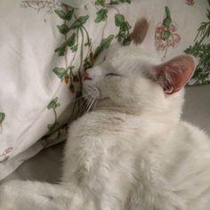 .white kitty   small bean.