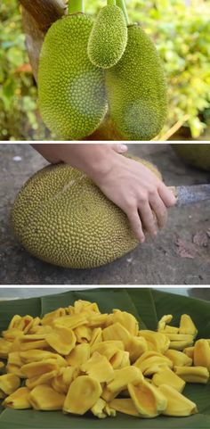 Jackfruit is one of the king of fruits! It's tropical, sweet, and unique, and it tastes like bubblegum!