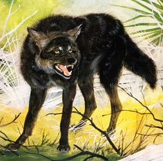 Florida Wolf | The Encyclopedia of Vanished Species by David Day