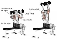 A compound exercise. Synergists: Lateral Deltoid Triceps Brachii Clavicular (Upper) Pectoralis Major Middle and Lower Trapezius Serratus Anterior and Supraspinatus. Fitness Workouts, Circuit Fitness, Fitness Motivation, Bodybuilding Training, Bodybuilding Workouts, Best Shoulder Workout, Shoulder Exercises, Dumbbell Shoulder Press, Overhead Press
